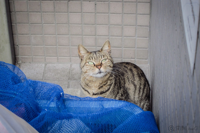 Today's Cat@2013-05-03