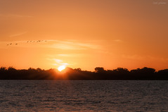 Sunset! (pll_photos) Tags: sunset sun lake sol beautiful birds yellow river raios nice nikon poa silhueta d90