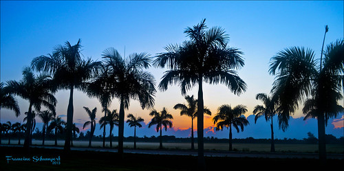 Palm Tree Row