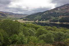Loch Trool, eastern end (The^Bob) Tags: scotland oak ancient dumfriesgalloway conifer lochtrool