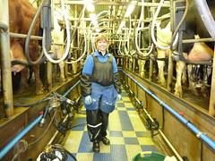 Melk 15 (FarmNor) Tags: barn cow farm rubber apron parlour dairy stable milking coverall kor bonde farmgirl melking ladugrd mjlka bondgrd lantbruk galonbyxor lypsy djursktare galonklder mjlkgrd avbytare mjlkgrop