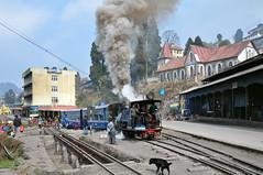India - West Bengal - Darjeeling - Railway - 18 (asienman) Tags: india darjeeling westbengal darjeelinghimalayanrailway asienmanphotography