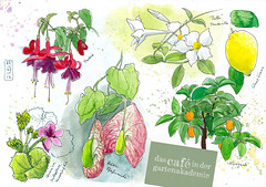 Blumen im Gewchshaus (KatrinMerle) Tags: katrinmerle gartenakademie berlindahlem blumen flowers