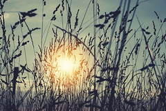 Vece (Sareni) Tags: sareni serbia srbija vojvodina banat juznibanat alibunar polje poljana livada field evening vece sunset sundows zalazak sun sunce sky nebo vintage sjaj light svetlost colors boje summer leto july 2016 twop