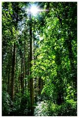 Deeper (arransquare) Tags: ireland light green woods deep