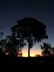 Inverell Sunset (rpiker101) Tags: australia newsouthwales nsw newengland inverell tree sunset