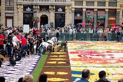 Flower Carpet on Grand Place - Brussels, Belgium 2016 (Durickas) Tags: flowercarpet grandplace brussels belgium 2016 tapisdefleurs flowersgrandplace japanesetheme unescoworldheritagesite