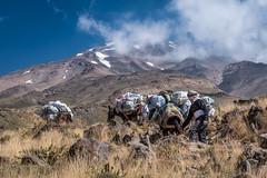 On the way to Mt Damavand in Iran (Nicolas Willemin) Tags: city damavand hiking iran mountains mtdamavand outdoor teheran trekking mule climbing