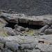 Explore Oregon Recreation: Jordan Craters