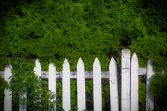 (248/366) Fence and Foliage (CarusoPhoto) Tags: ef35mm f14l usm ef35mmf14lusm pentax ks2 john caruso carusophoto fence foliage alley tree trees picket white photo day project 365 366 banal mundane ordinary everyday