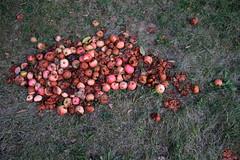 IMG_7038 (nicole.schmidtova) Tags: photography czechrepublic canon canon60d czech countryside nature simply autumn fall