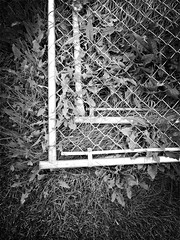 Fence (bratli) Tags: fence greass weeds iphone
