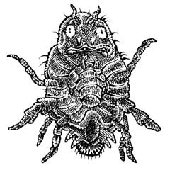 Flea-ish (Don Moyer) Tags: flea bug ink drawing notebook moyer donmoyer brushpen