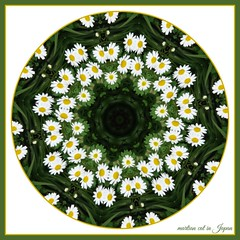 """Dream lofty dreams, and as you dream, so shall you become."" (martian cat) Tags: daisy macro martiancatinjapan allrightsreserved flower nature daisies allrightsreserved martiancatinjapan martiancatinjapan closeup flowers allrightsreserved allrightsreserved onwhite inspirational spunflowers kaleidoscope martiancatinjapan martiancat creativity"