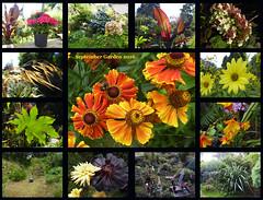 September Garden 2016 (Durley Beachbum) Tags: garden september bournemouth flowers