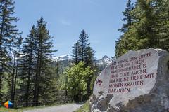 Eagle (HendrikMorkel) Tags: austria family sonyrx100iv vorarlberg sterreich bregenzerwald mountains alps alpen berge natursprngewegbrandnertal