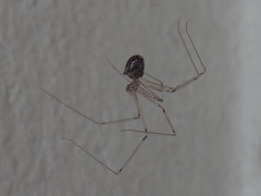 DSC06310 (familiapratta) Tags: sony dschx100v hx100v iso100 natureza inseto insetos nature insect insects