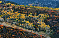 The Aspen Valley (Aubrey Stoll) Tags: aspen owlcreekroad mountainpass mountains shrubs aspentrees yellow landscape valley vast scenery nature wild wilderness hills rock colorado usa america landscapephotography touring tourism hiking driving hillroads mountainpasses