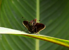 Mariposa CR (Zahomi) Tags: butterfly mariposa naturaleza nature