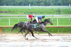 2016-08-21 (37) r9 Feargal Lynch on #5 American Progress (JLeeFleenor) Tags: photos photography md maryland laurelpark racing jockey   jinete  dokej jocheu  jquei okej kilparatsastaja rennreiter fantino    jokey ngi horses thoroughbreds equine equestrian cheval cavalo cavallo cavall caballo pferd paard perd hevonen hest hestur cal kon konj beygir capall ceffyl cuddy yarraman faras alogo soos kuda uma pfeerd koin    hst     ko  wet muddy xavierperez xman