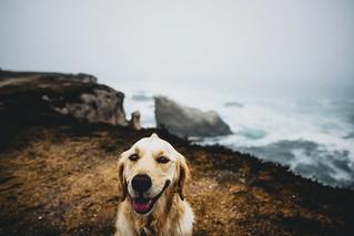 coast dog