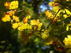 Solar sparks in the autumn leaves (swetlanahasenjger) Tags: eichel wald herbst licht saariysqualitypictures ngc coth coth5 magicmomentsinyourlifelevel3 sunrays5