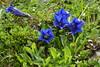 DSC_4798 (d90-fan) Tags: rauris raurisertal natur alpen salzburgerland österreich nationalpark npht hohe tauern wandern krumltal seidlwinkeltal
