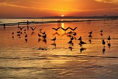 Algarve/Praia da Falésia (Zéza Lemos) Tags: falésias praia água algarve areia mar sunset pôrdesol puestasdesol entardecer puestadelsol barcos gaivotas