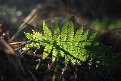 fern (carbeck) Tags: forest fall autumn germany hesse marburg square 35mm leaves fern backlight wallpaper 16x10 16x9