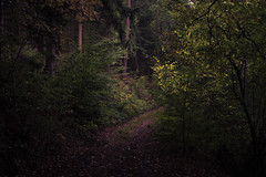 The Path (Netsrak) Tags: tree trees baum bume rheinbach nordrheinwestfalen deutschland de wald forst forest woods path way weg waldweg leaves leaf blatt bltter nature natur autumn herbst