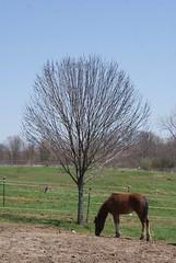 DSC08925 (jmbedel) Tags: ohio horses horse medina lodi
