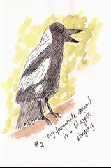EDinM #2 magpie singing (sarabeee) Tags: