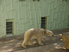 (minimapworld) Tags: bear polar