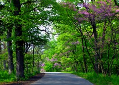 Spring Ride (Theresa*) Tags: trees green season illinois spring oneofakind naturesbest lisle mortonarboretum treepics flickrnature beautifulcapture enjoyillinois natureandlandscapes prettynaturephotos natureanythinggoes prettyfreakinsweet springandsummeraroundtheworld nikond7000 postthebest onlythebestarememoriesthroughphotography