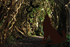 Kenmare_haunted_forest