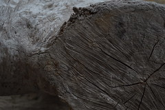 Driftwood Log (hanbanana124) Tags: ocean beach driftwood