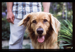 (Attila Pasek) Tags: fujichrome fujifilm pentax50mmf17 pentaxsuperme velvia100 dog film transparency