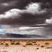 Rain in Namibia-7346