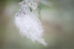 Look Down (Evelyn Ford) Tags: down feather branch bokeh green houstontrail langley britishcolubia ef100mmf28lmacroisusm canoneos5dmarkii