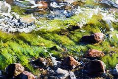 Moos im Wasser (oleschmidt_fotografie) Tags: moos water stones green waves wasser wellen gischt unterwasser canoneos700d pflanzen under steine kste moss