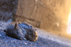 IMG_9410 (anthrax013) Tags: saint petersburg travel dead death rat corpse necro necrophilia tunel ligth