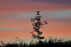 Sunset (Roger Daigle) Tags: trees sunset nikon