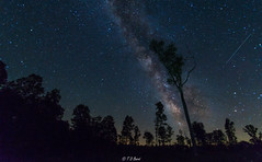 Perseid Tree (Tim from Pgh) Tags: astrophotography milkyway galacticcenter nightphotography longexposure perseidmeteorshower perseid astronomy tidiote northernpennsylvania westernpennsylvania forestcounty heartscontent usroute62 pentaxk30 pennsylvania alleghenynationalforest