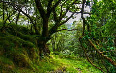 Glen Kilmichael Argyll 31 July 2016-0041a.jpg (JamesPDeans.co.uk) Tags: argyllshire plants gb strathclyde unitedkingdom for man who has everything britain nature colour digital downloads licence trees woods green scotland europe uk james p deans photography digitaldownloadsforlicence jamespdeansphotography forthemanwhohaseverything