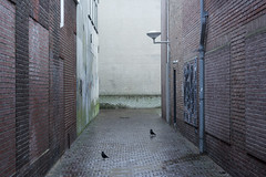 Rainy street (Jan van der Wolf) Tags: map14822v bird birds street streetphotography straat lamp wet regen rainy nat perspective perspectief drain regenpijp wall walls muren muur light noordwijk extersslop