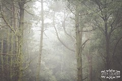 Fun in fog on the moors of derbyshire (AndyG-Photography) Tags: peakdistrict trees fog mist derbyshire