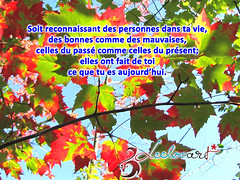 Citation - Crdit photo Modalisa (Leelooart) Tags: citation gratitude maudalisa leelooart maudelauzon marielauzon automne automn paysage nature tree arbre photographie photography maximegilbert deepakchopra quote quotes citations color colored colorful extrieur rivire soleil ensoleill citationdujour phrasedujour textes quoteoftheday thankful goodvibes goodenergy instacitations travail creative dveloppement