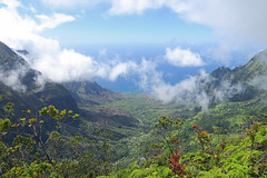 Kauai_Napali Coast State Park_valley view (penjelly) Tags: hawaii kauai island insel usa sdpazifik pacific inselkette pazifischer ozean polynesienalohastate sandwichinseln sandwichislands polynesia ozeanien mokupuniohawaii waimea state park napali coast kokee kste ausblick view schroff tal valley green wolken clouds