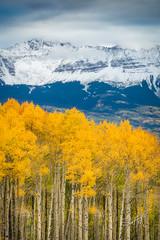 Yellow Aspens (Travis Klingler (SivArt)) Tags: fallcolors danballard
