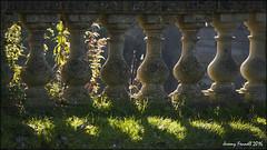 Avoncliff (zolaczakl ( 2.5 million views, thanks everyone)) Tags: bradfordonavon uk england wiltshire photographybyjeremyfennell nikond7100 october 2016 earlymorninglight nikonafsnikkor24120mmf4gedvrlens